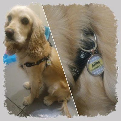 креативни кучешки медальони
