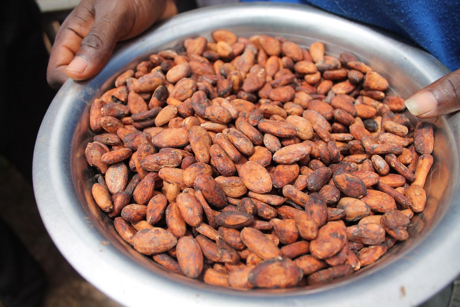 Dipa's Daily Dumplings: Theobroma Cocoa, The Food Of The Gods