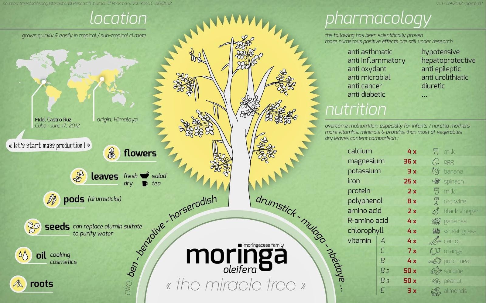 Moringa - A Multivitamin Shot!