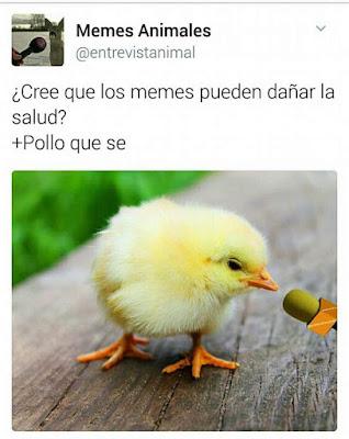 pollo qué sé