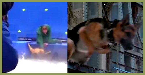 Esquadrãopet Filme Quatro Vidas De Um Cachorro é Denunciado Por