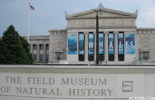 Field Museum Chicago Natural History