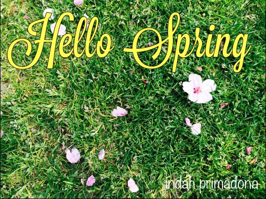 sprig, spring in japan, sakura, sakura flower, flower, bunga sakura