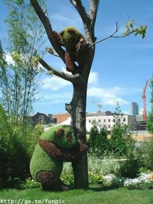 paisajismo pandas en el jardín