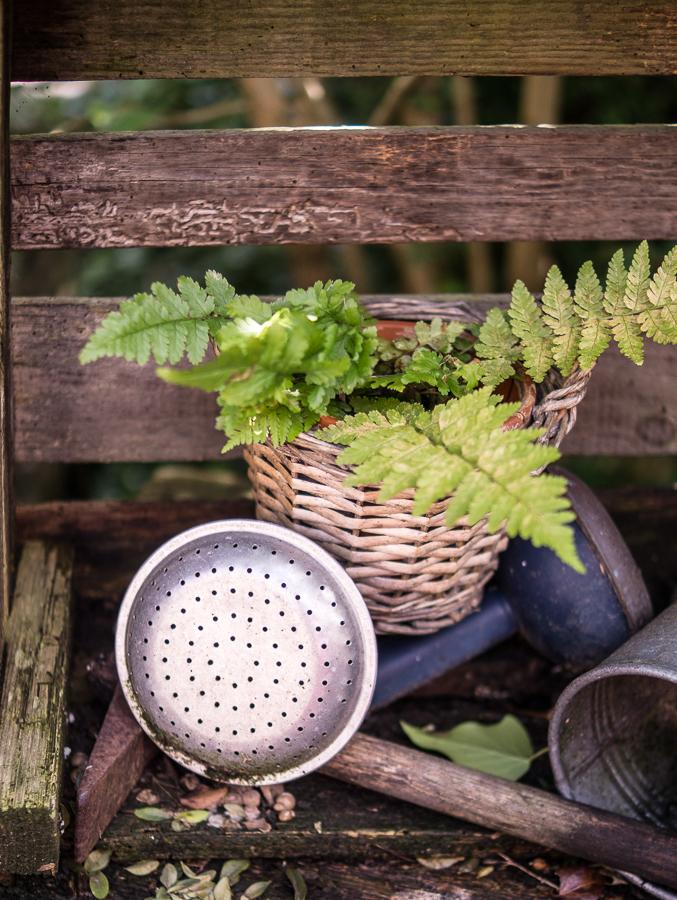 Blog + Fotografie by it's me! | fim.works | Bunt ist die Welt | Garten im Juni 2016 | Farn im Holzkörbchen