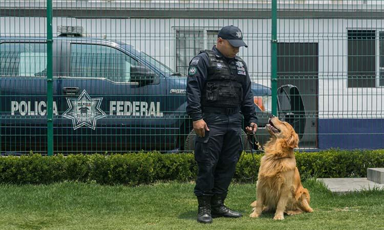 NI LOS PERROS SE SALVAN: EL NARCO AMENAZA DE MUERTE A LOS PERROS DE LA POLICÍA DE MÉXICO