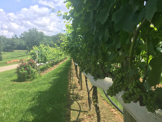 Wine Tasting in Cherokee County, North Carolina