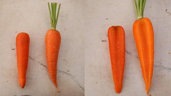 Cách phân biệt cà rốt trung quốc