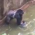 Gempar Inilah Yang Terjadi Kepada Gorilla Gara Budak Terjatuh Ke Dalam Kandangnya
