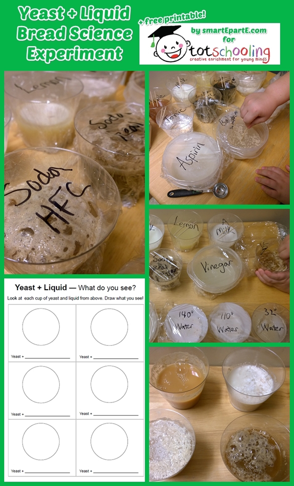 Yeast + Liquid Science Experiment + Free Printable