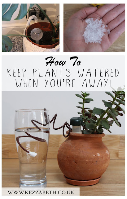 How to keep plants watered when you're away