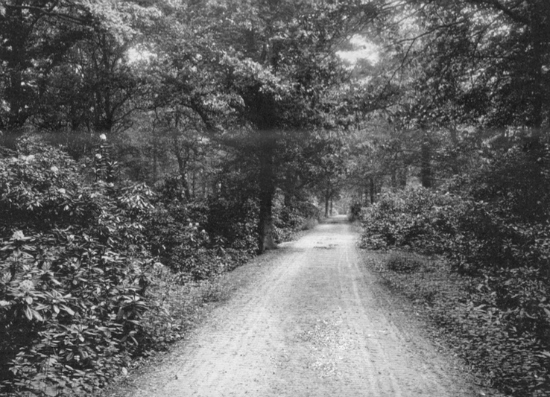 Photograph of the secluded carriage drive at Leggatts taken from the 1911 auction brochure