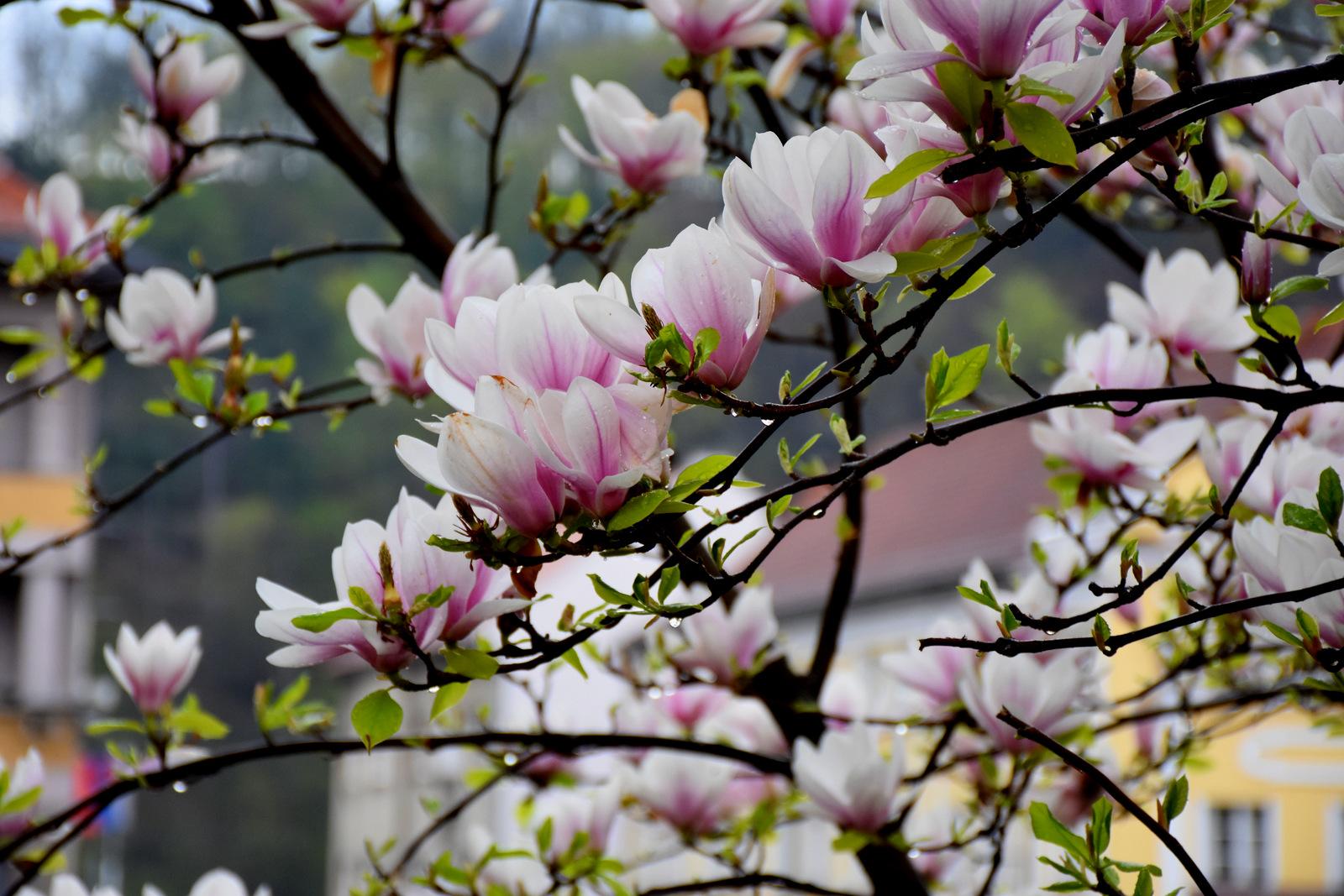 spring ... flower power