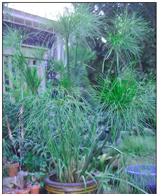 Growing With Plants: My River Nile