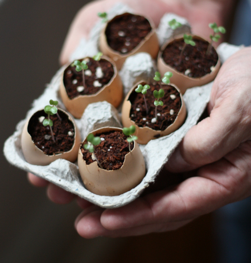 17 Apart How To Plant Seeds Using Eggshells