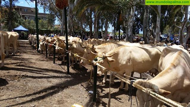 Curso gratuito sobre bienestar en el transporte de animales en Los Llanos de Aridane