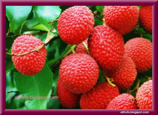 fruits that start with the letter c fruits name starts with the letter quot l 21911 | lychee 17 copy