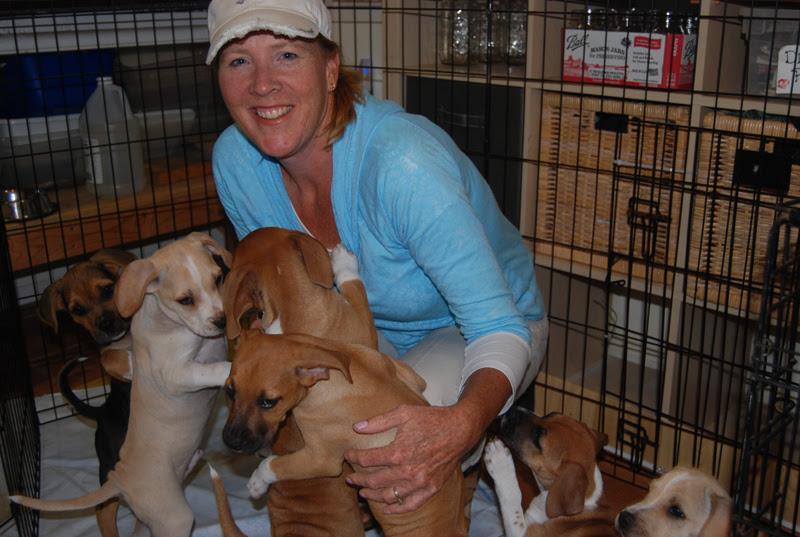 Rescue Dogs Channel  News Nov   Greenville Sc