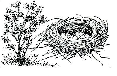 nido de Cardenilla Paroaria capitata