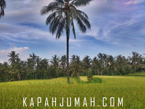 Lanyaan Jogging Track di Desa Tamblang