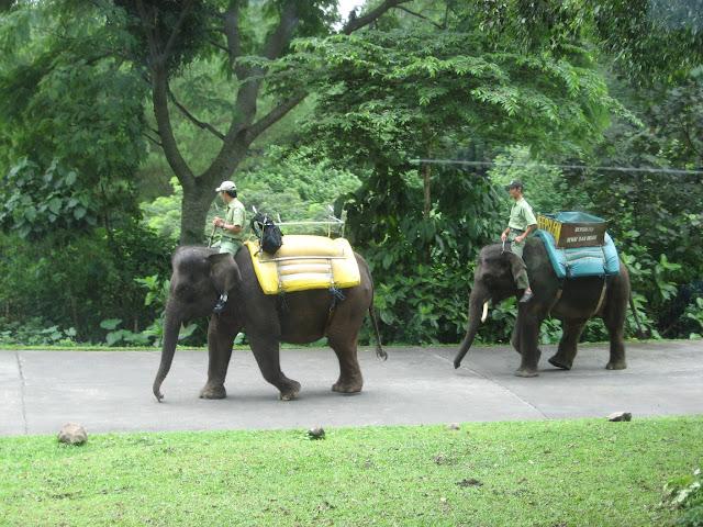 gajah taman safari prigen pasuruan