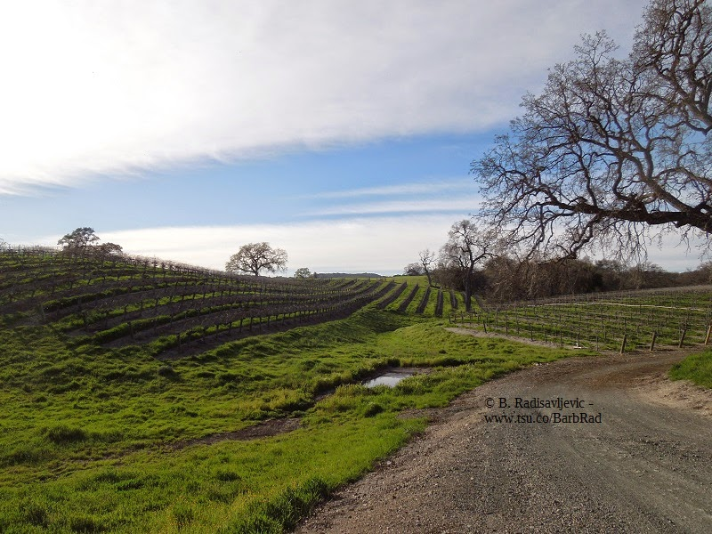 A Photo Walk Through the Vineyards of Zenaida Cellers