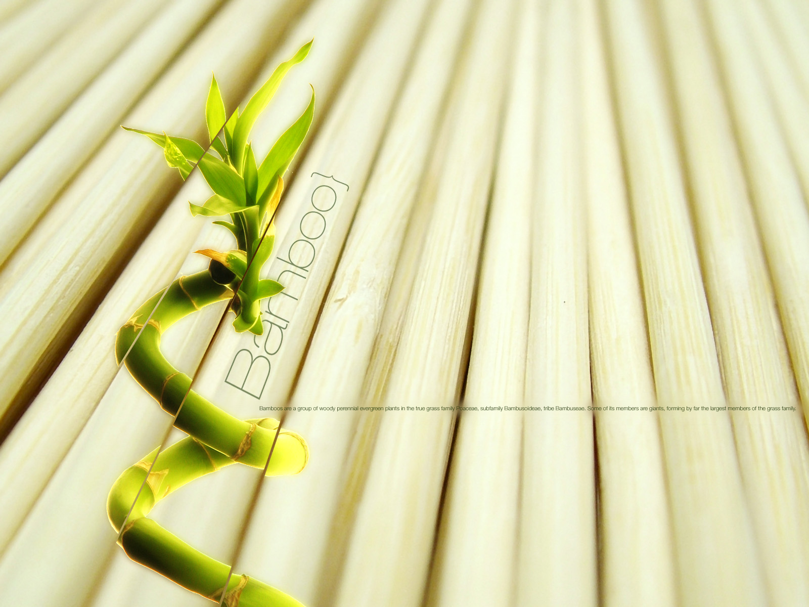 Bamboo Wallpaper Bamboo Textured Wallpaper