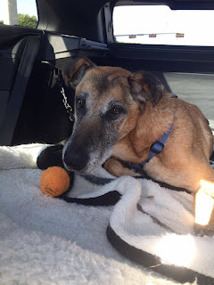 Furax, picture provided by Mission K9 Rescue