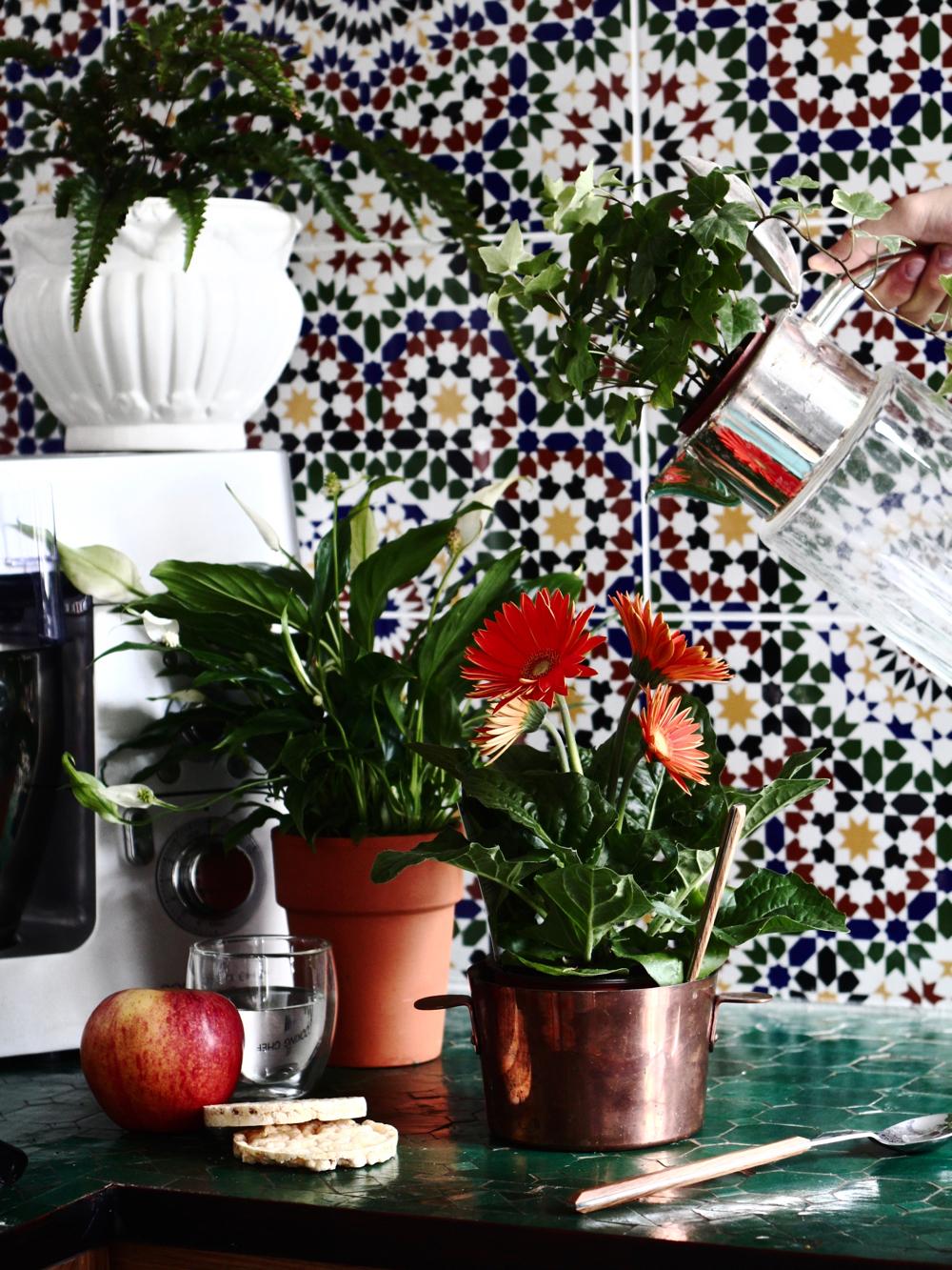 Oxygéner et décorer sa maison ou son appartement c'est possible en un seul coup grâce aux plantes purifiantes !