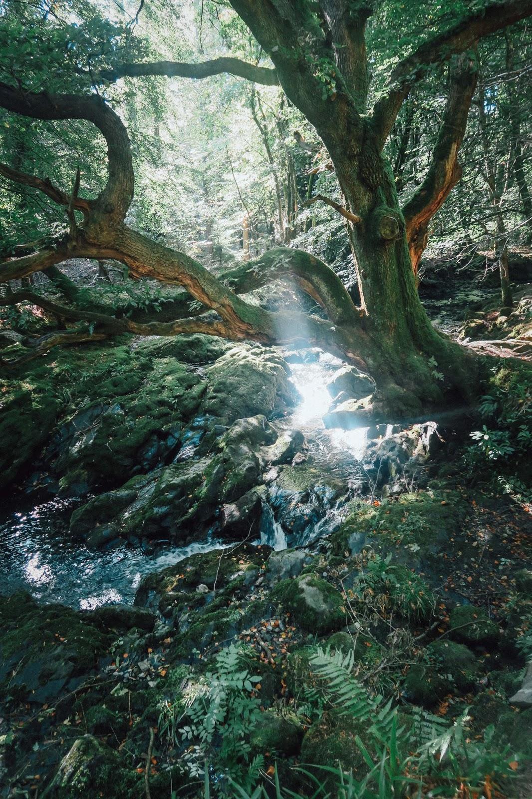 northern ireland walk hike nature liquid grain