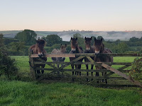 The Exmoor Ponies (and Donk!)