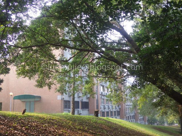 Meteor Garden university