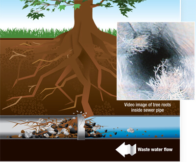 A drawn graphic showing tree roots inside a sewer pipe. The roots have blocked small pieces of black, white and brown debris, causing a clog. A small black and white photo from a sewer camera shows actual root hairs in a pipe.