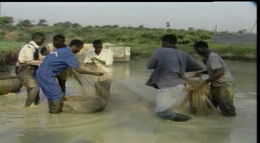 fish farming business plan in nigeria pdf995