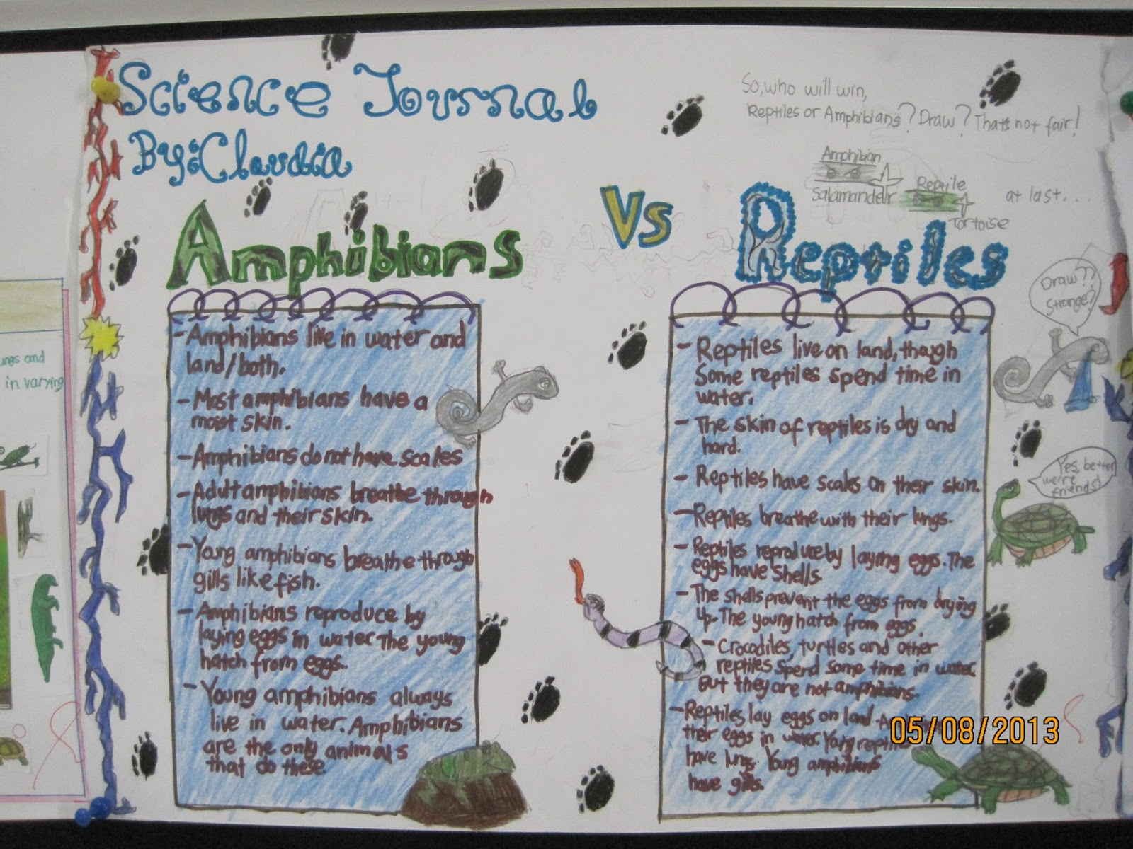 Our Fantastic Journey Of Learning Reptiles Vs Amphibians