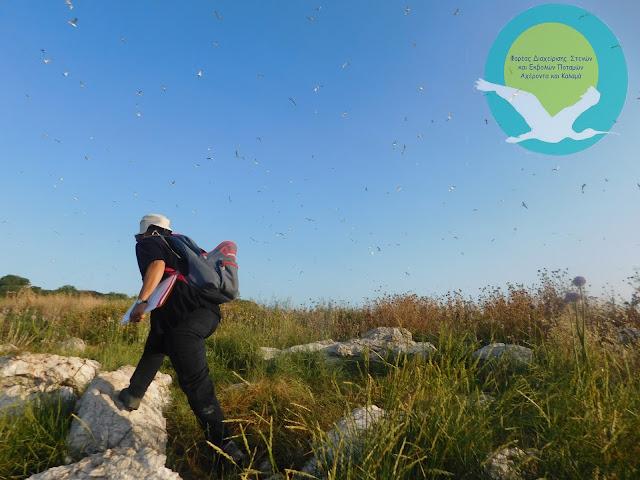 Ηγουμενίτσα: Απογραφή της αποικίας των ερωδιόμορφων στη νήσο Πρασούδι για το έτος 2016
