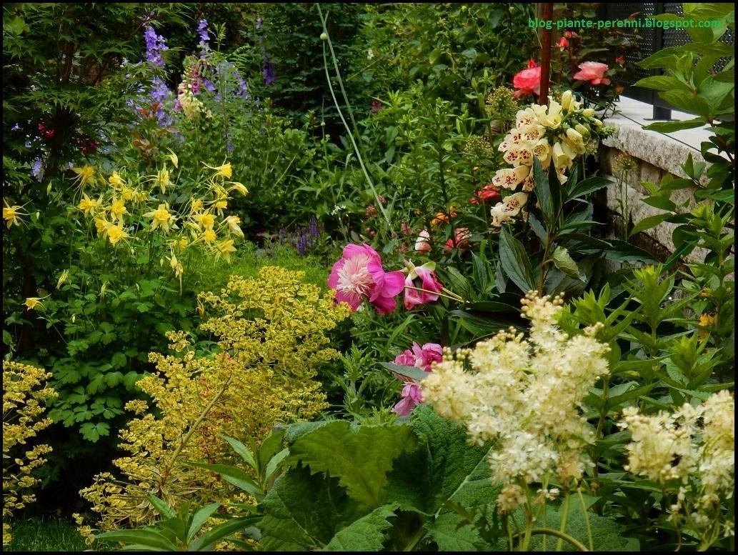 Un giardino di perenni in ticino giardino di giugno for Piante ricadenti perenni