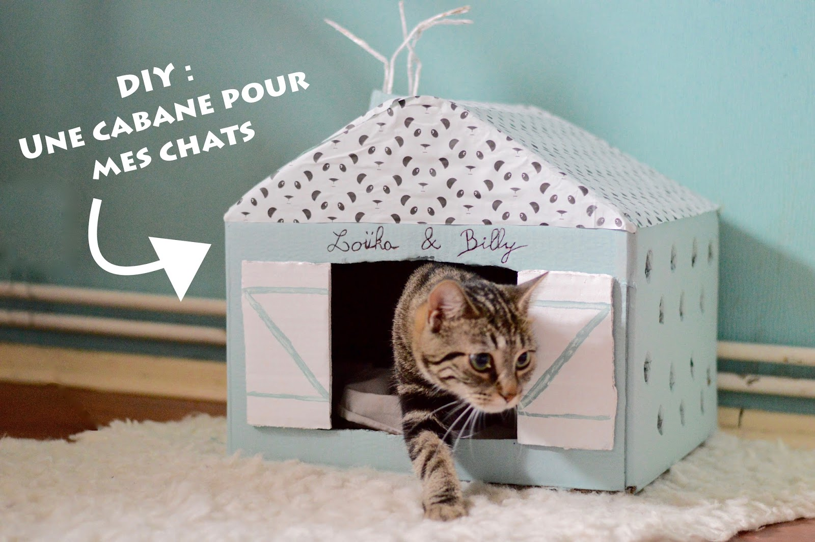 diy une cabane pour mes chats. Black Bedroom Furniture Sets. Home Design Ideas