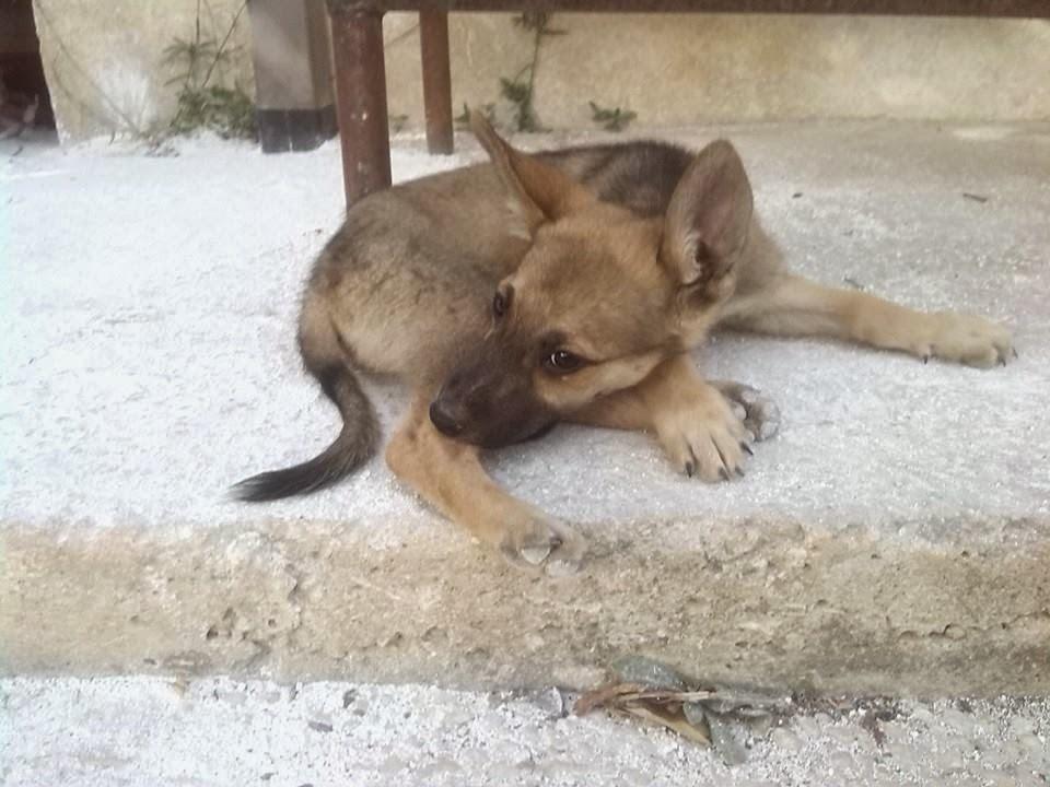 Adotta un cane a siracusa cuccioli di lupetto in regalo a for Siti di oggetti in regalo