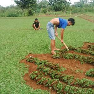 Tukang taman minimalis | tukang rumput murah jakarta depok