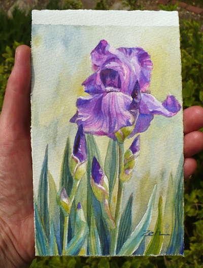 6x4 iris watercolor painting