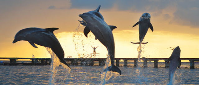 Parque Dolphinaris Cancun em Cancún