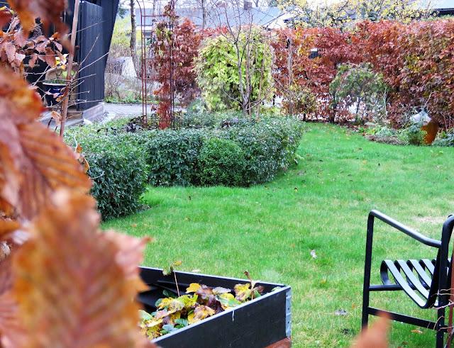Hagen min kler seg i rust. Fra hagebenken med blikk utover hagen. Furulunden IMG_0045