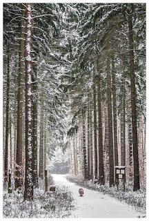 Winter im Zeitzer Forst IV