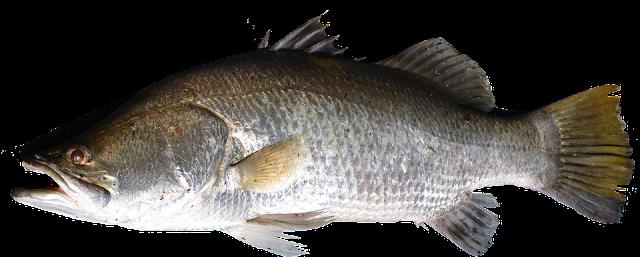 pescado y acidos grasos