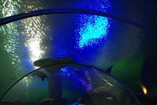 Vinpearl Underwater World