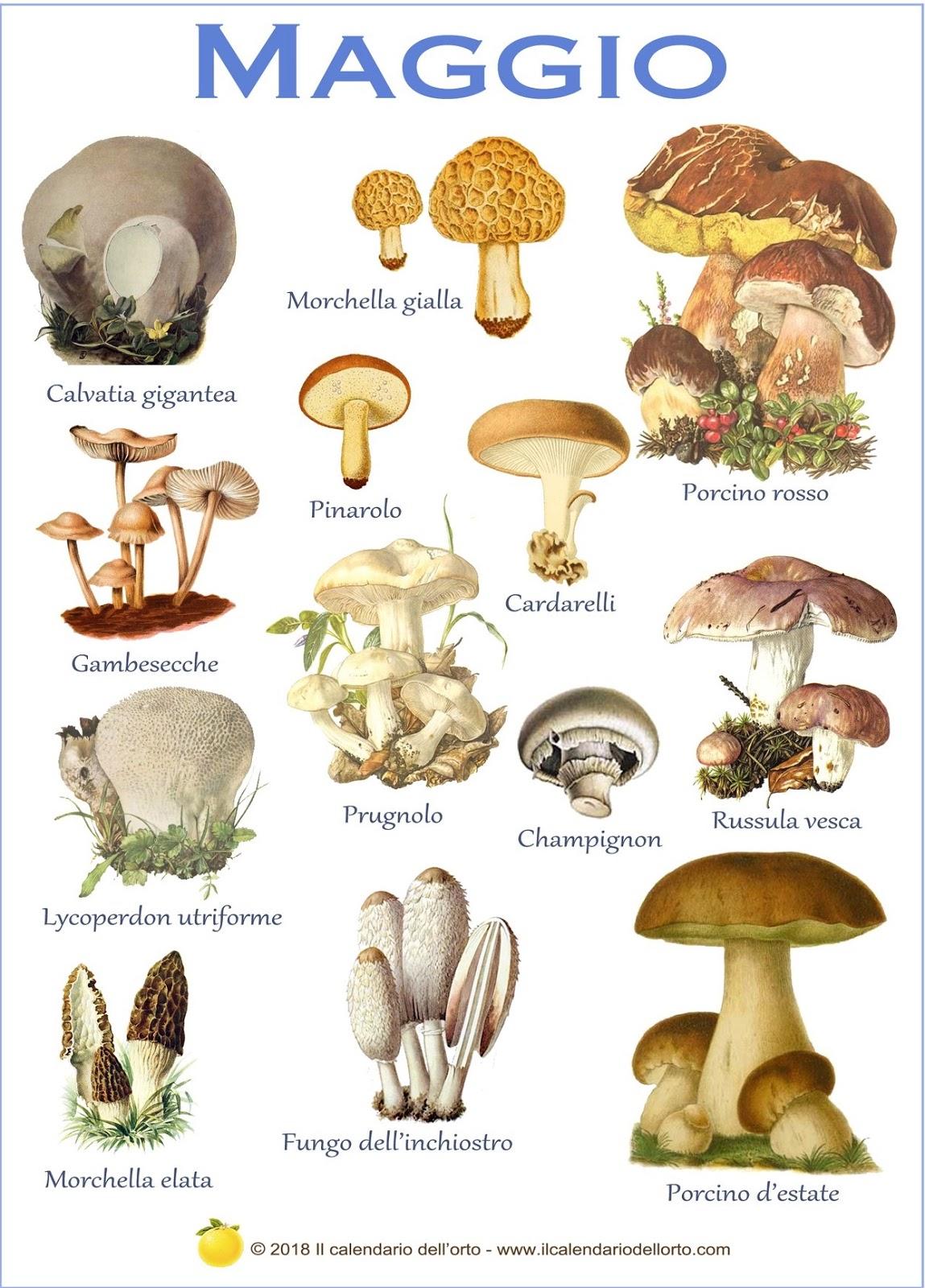 funghi che ci sono a maggio