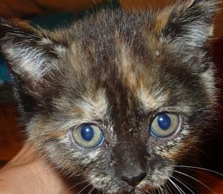 Feliway Difusorn antiestres para gatos
