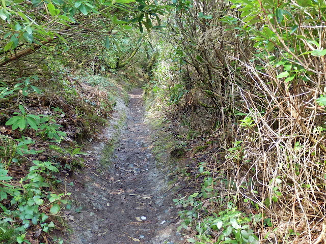 Footpath in Gover Valley, Cornwall