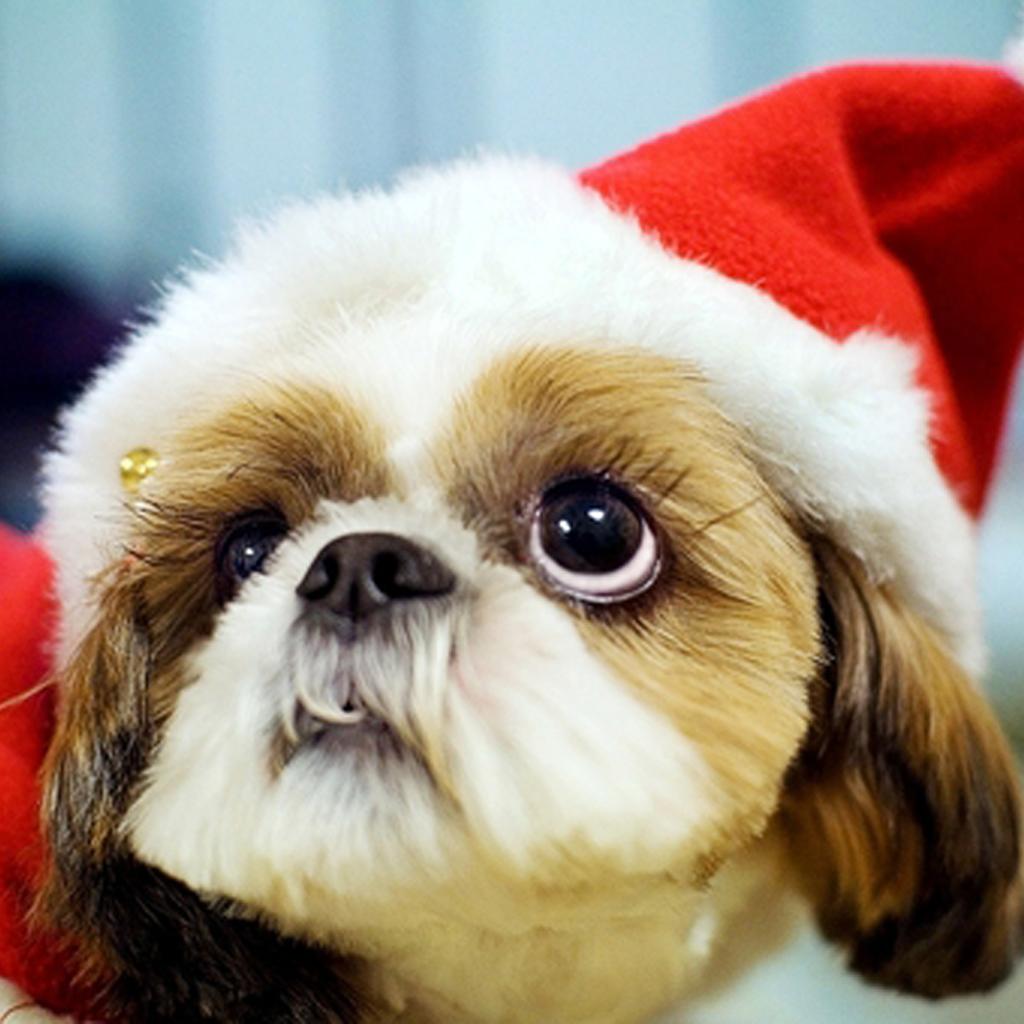 christmas puppy wallpaper - photo #36